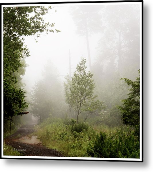 Misty Road At Forest Edge, Pocono Mountains, Pennsylvania Metal Print