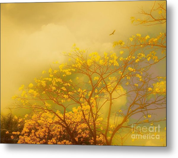 Misty Yellow Hue -poui Metal Print