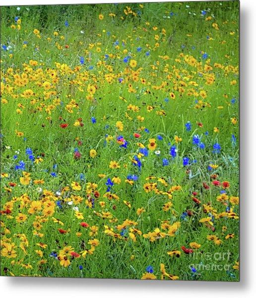 Mixed Wildflowers In Bloom 538 Metal Print