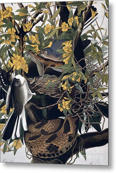 Mocking Birds And Rattlesnake Metal Print