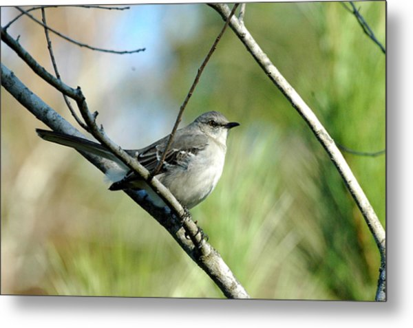 Mockingbird In Green Metal Print by Teresa Blanton