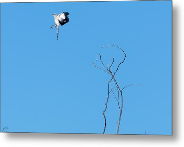 Mockingbird Up Metal Print