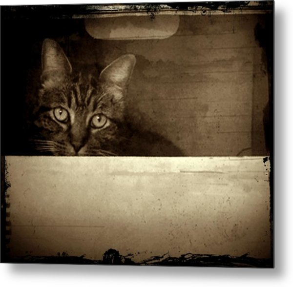 Mollie In A Box Metal Print