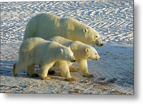 Mom And Babies Metal Print