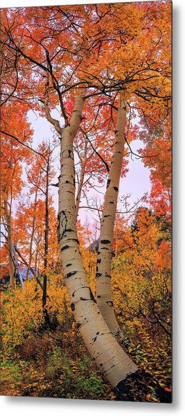 Moments Of Fall Metal Print