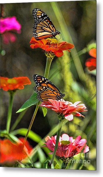 Monarch 8 Metal Print