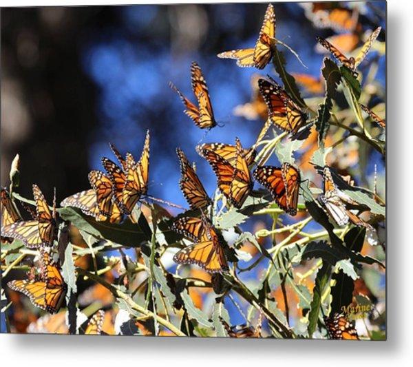 Monarch Active Cluster Metal Print