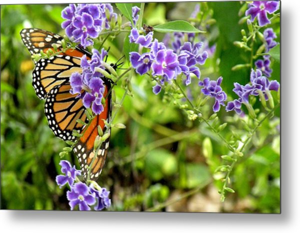 Monarch And Purple Flowers Metal Print by Rosalie Scanlon