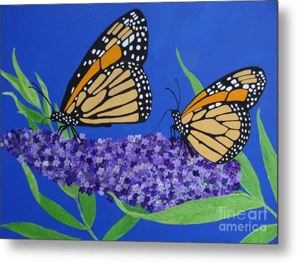 Monarch Butterflies On Buddleia Flower Metal Print