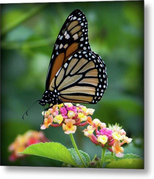 Monarch Butterfly Art II Metal Print