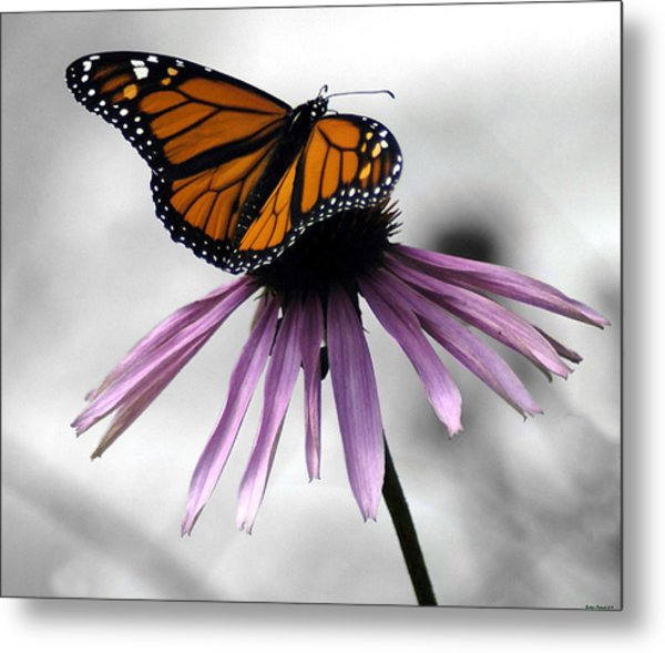 Monarch Butterfly Metal Print by Evelyn Patrick