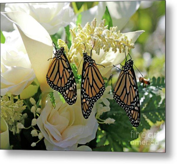 Monarch Butterfly Garden  Metal Print