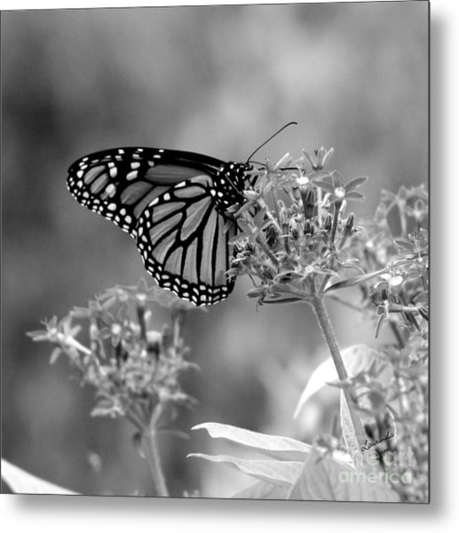 Monarch Butterfly In Bw Metal Print