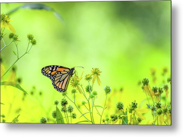 Metal Print featuring the photograph Monarch Butterfly by Lori Coleman