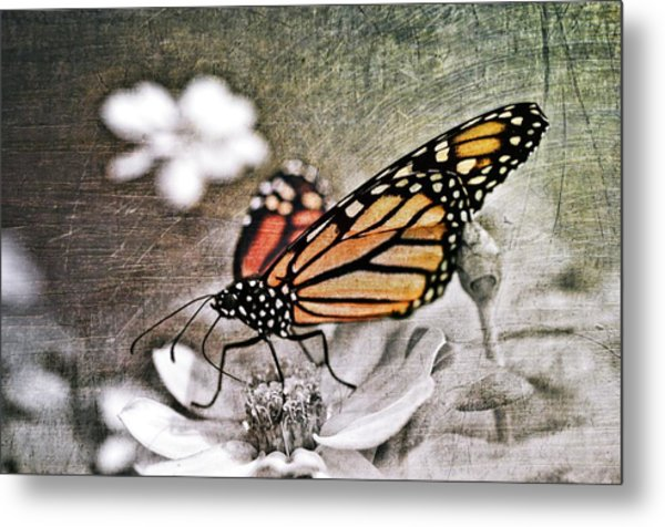 Metal Print featuring the photograph Monarch Butterfly by Marianna Mills