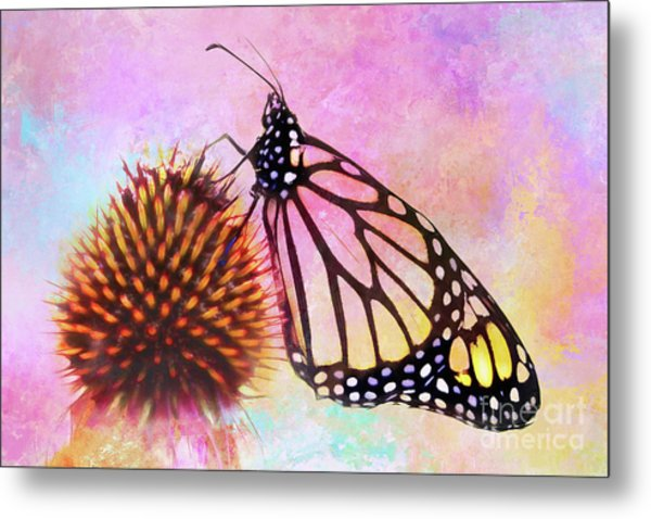 Monarch Butterfly On Coneflower Abstract Metal Print