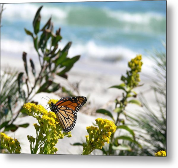 Monarch By The Sea Metal Print by Tom LoPresti