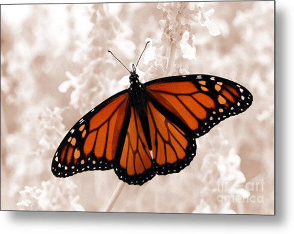 Monarch Metal Print by Jeannie Burleson