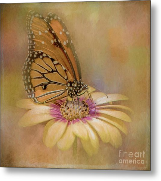 Monarch On A Daisy Mum Metal Print