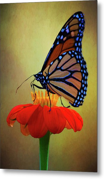 Metal Print featuring the photograph Monarch On A Mexican Sunflower by Chris Lord