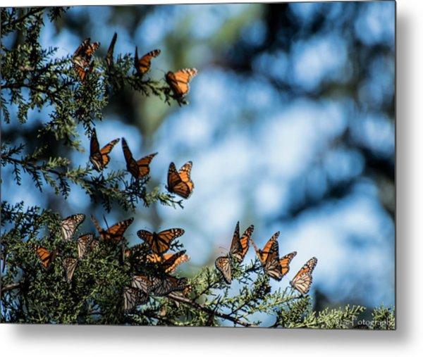 Monarchs In The Tree Metal Print
