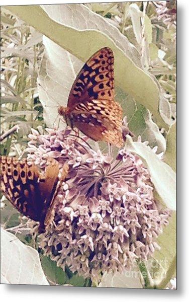 Monarch's On Milkweed Metal Print