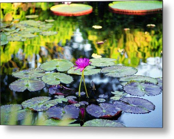 Monet Lilies Metal Print