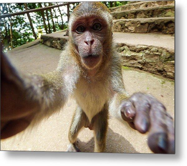 Monkey Taking A Selfie Metal Print