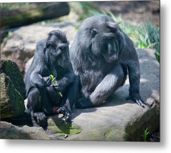 Monkeys Metal Print by Christina Durity