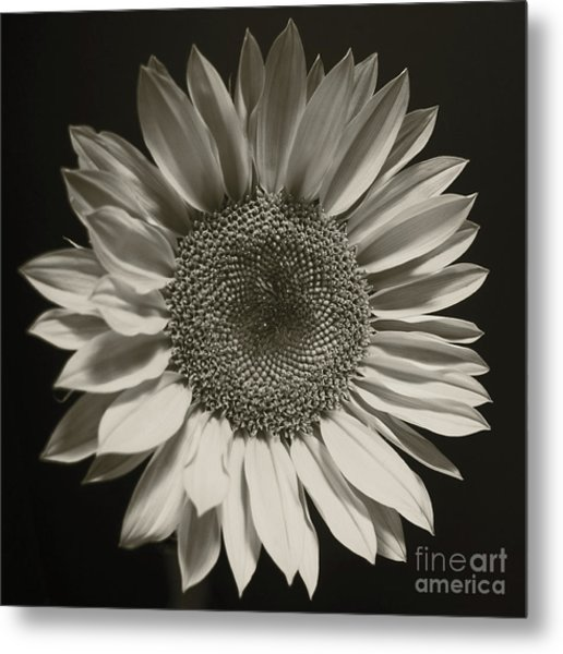 Monochrome Sunflower Metal Print