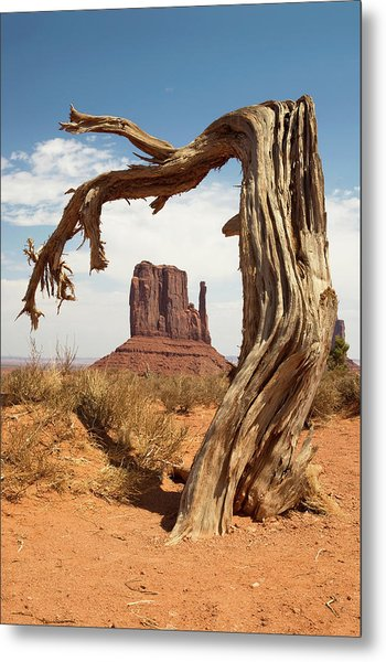 Monument Valley Desert Tree Metal Print