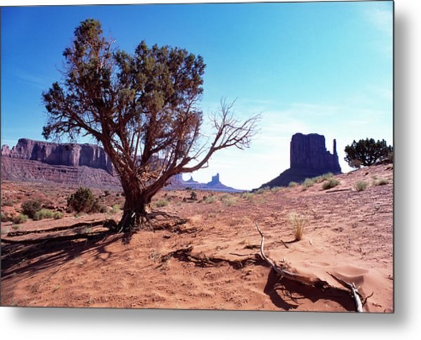 Monument Valley Tree 1 Metal Print by Kim Lessel