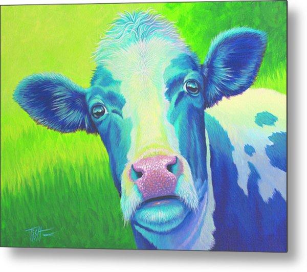 Moo Now Blue Cow Metal Print