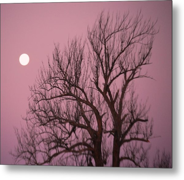 Moon And Tree Metal Print