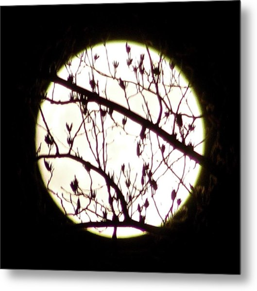 Moon Branches Metal Print