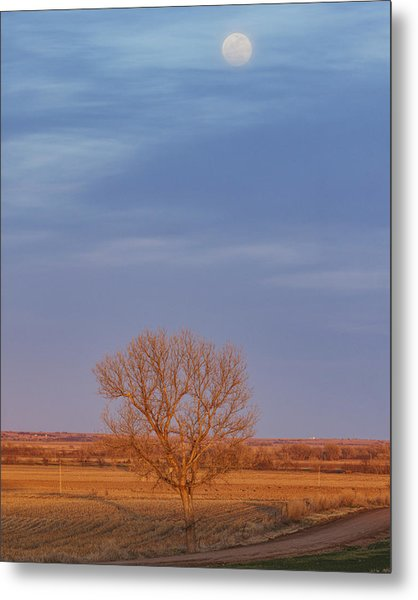 Metal Print featuring the photograph Moon Over Tree by Rob Graham