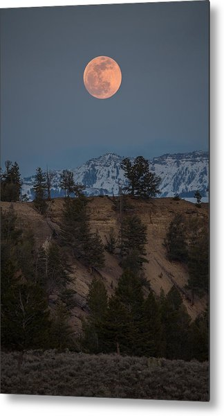 Moon Rising // Tower Junction, Yellowstone National Park Metal Print