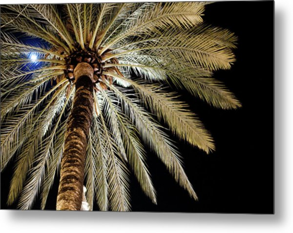 Moon Through Palm Tree Metal Print