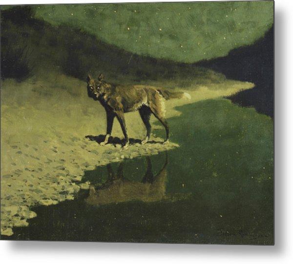 Moonlight, Wolf Metal Print