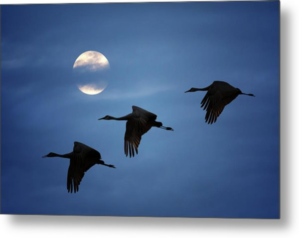 Metal Print featuring the photograph Moonlit Flight by Susan Rissi Tregoning
