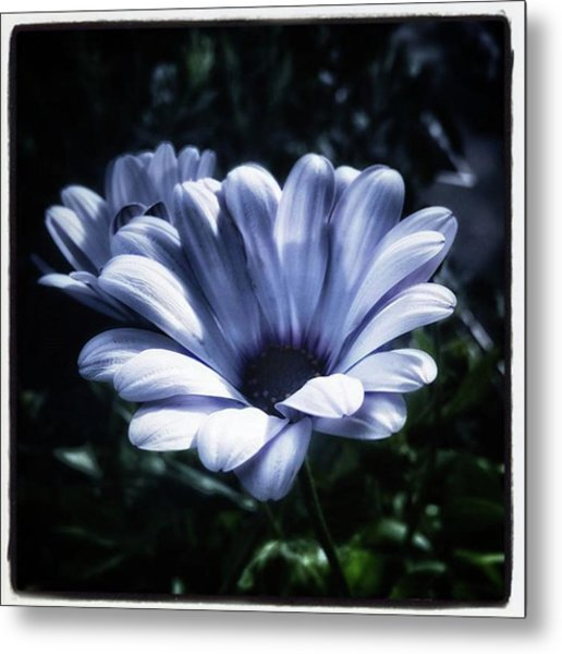 Metal Print featuring the photograph Moonlit Petals. From The Beautiful by Mr Photojimsf