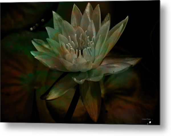 Moonlit Water Lily Metal Print