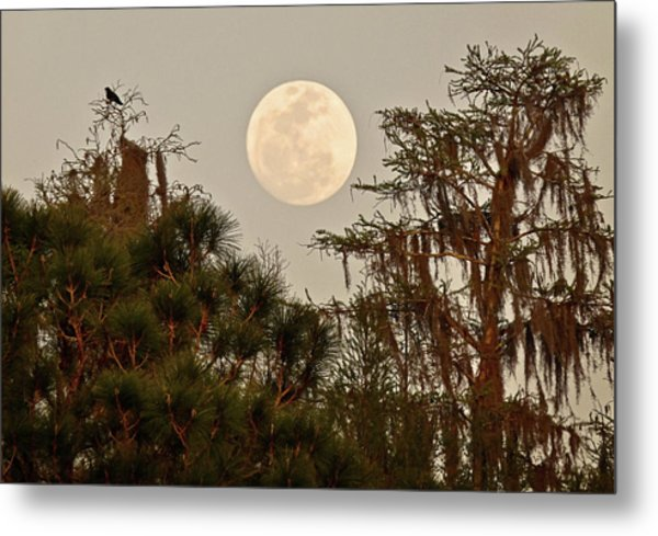 Moonrise Over Southern Pines Metal Print