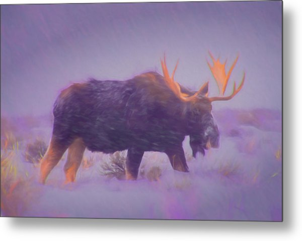 Moose In A Blizzard Metal Print