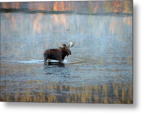 Moose In Autumn Snake Metal Print by Michael Riley