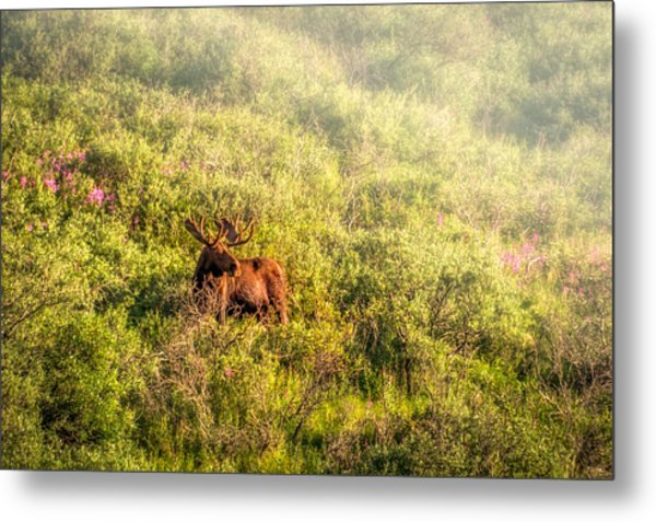 Moose In The Mist Metal Print