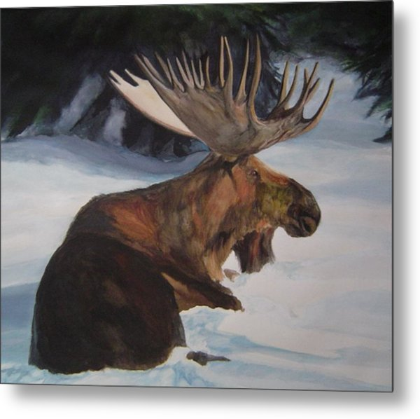 Moose In Winter Metal Print by Susan Tilley