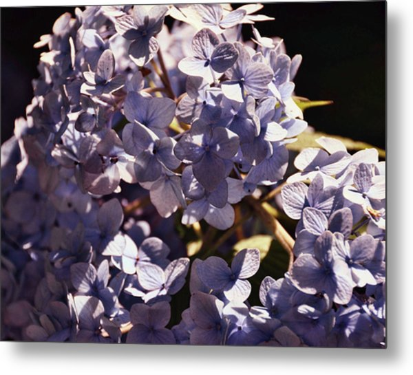Mopheads Metal Print by JAMART Photography