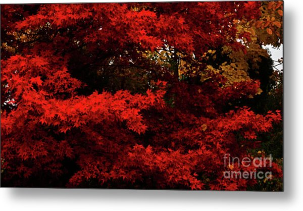 More About Maple Metal Print