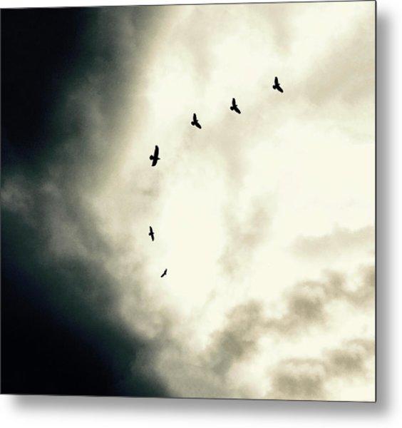 Big Sky Crows Metal Print